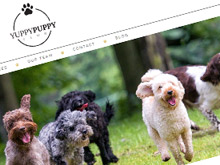 yuppy-puppy-cms-website-design-sydney